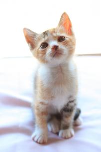 飼い主に何か言いたげに見る子猫の写真素材 [FYI02992511]