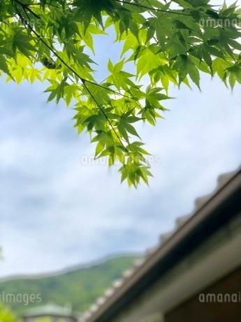 空と葉の写真素材 [FYI02992513]