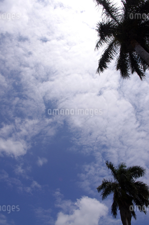 ヤシの木と空の写真素材 [FYI02992633]
