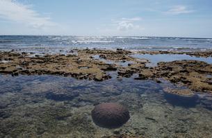 遠浅の美しい海の岩サンゴの写真素材 [FYI02992880]