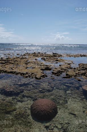 遠浅の美しい海の岩サンゴの写真素材 [FYI02992881]