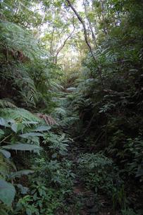 南国沖縄のジャングルの植物の写真素材 [FYI02992883]