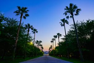 椰子の木の通りの写真素材 [FYI02993003]