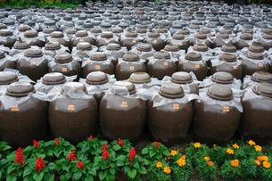 黒酢壷畑の写真素材 [FYI02993021]