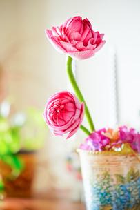 花弁を折り畳んだ蓮の花の写真素材 [FYI02993022]