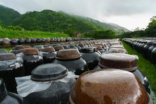 黒酢の壷畑の写真素材 [FYI02993025]