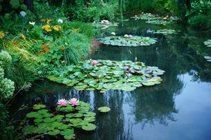 睡蓮の池の写真素材 [FYI02993043]