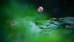 光の中の睡蓮の写真素材 [FYI02993083]