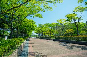 春の大森山公園の写真素材 [FYI02993139]
