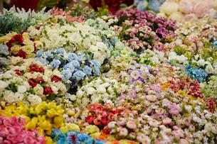 花屋の写真素材 [FYI02993736]