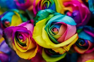 虹色のバラの写真素材 [FYI02993738]