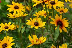 黄色い花とカエルの写真素材 [FYI02993952]