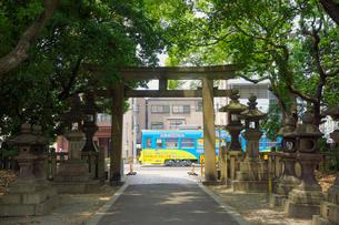 住吉大社の鳥居と阪堺電車の写真素材 [FYI02994470]