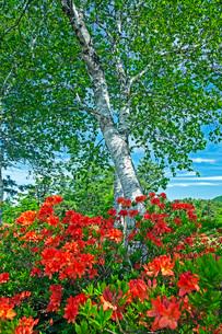 初夏の蔵王坊平高原の写真素材 [FYI02994512]