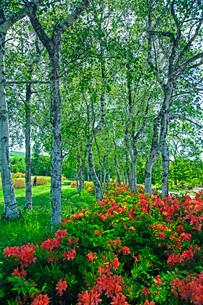 初夏の蔵王坊平高原の写真素材 [FYI02994516]