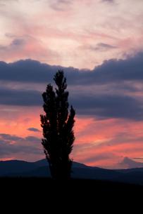 夕焼空とポプラの写真素材 [FYI02994911]