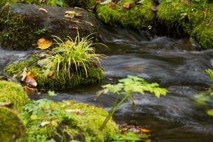 山奥の渓流の写真素材 [FYI02994920]