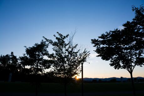 夕暮れの公園の写真素材 [FYI02994922]