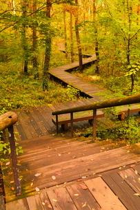 木材で造られた秋の遊歩道の写真素材 [FYI02994945]