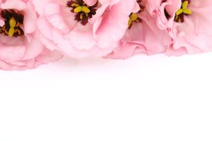 トルコキキョウの花束の写真素材 [FYI02994997]