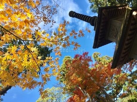 秋の空と紅葉の写真素材 [FYI02995115]