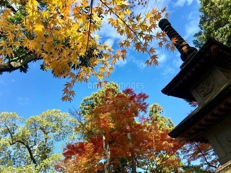 秋の空と紅葉の写真素材 [FYI02995116]