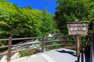 新緑と竜頭の滝の写真素材 [FYI02995404]