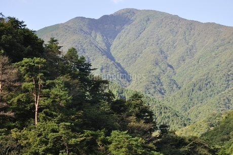 青根から眺める大室山の写真素材 [FYI02995448]