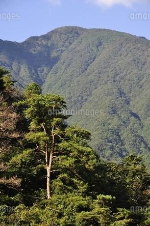 青根から眺める大室山の写真素材 [FYI02995451]
