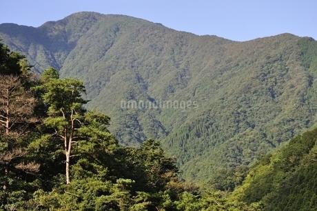 青根から眺める大室山の写真素材 [FYI02995453]