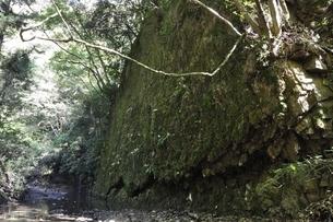牧馬沢の絶壁の写真素材 [FYI02995470]