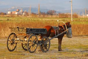 荷車を曳く馬(トルコ地中海沿岸地方) の写真素材 [FYI02995615]