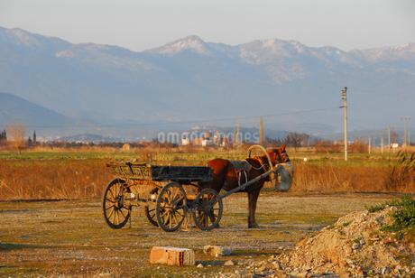 荷車を曳く馬(トルコ地中海沿岸地方) の写真素材 [FYI02995617]
