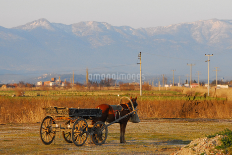 荷車を曳く馬(トルコ地中海沿岸地方) の写真素材 [FYI02995619]