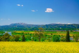 菜の花公園と斑尾山と妙高山と千曲川とわた雲の写真素材 [FYI02995729]