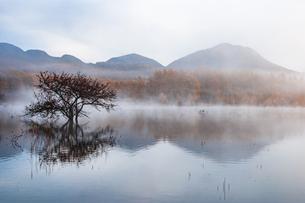 日光国立公園朝霧の小田代ヶ原紅葉のカラマツ林と湖に影映すコナシの写真素材 [FYI02995842]