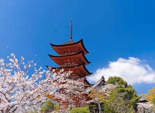 宮島の五重塔と桜の写真素材 [FYI02995956]