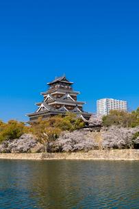広島城天守とお堀の桜並木の写真素材 [FYI02995961]