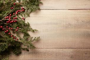 背景を木に置いたヒバの木と赤い実の写真素材 [FYI02996046]
