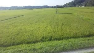 千葉県佐倉市の田圃の写真素材 [FYI02996310]