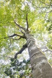 緑の木の写真素材 [FYI02996446]
