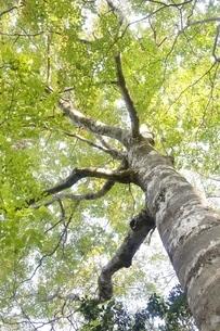 緑の木の写真素材 [FYI02996447]