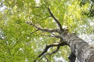緑の木の写真素材 [FYI02996449]