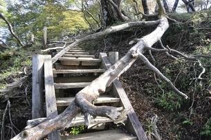 山道を塞ぐ倒木の写真素材 [FYI02996451]