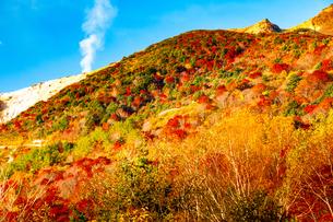 磐梯吾妻スカイラインより紅葉の山肌と噴煙の写真素材 [FYI02996474]