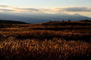 霧ヶ峰高原朝焼けに染まるススキの草原と光芒の八ヶ岳連峰の写真素材 [FYI02996673]