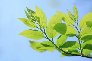 新緑と青空の写真素材 [FYI02996783]