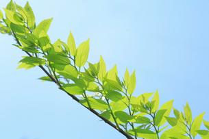 新緑と青空の写真素材 [FYI02996786]