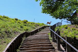 若草山の登山道の写真素材 [FYI02996884]