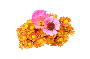 菊とジニアの花束の写真素材 [FYI02996892]